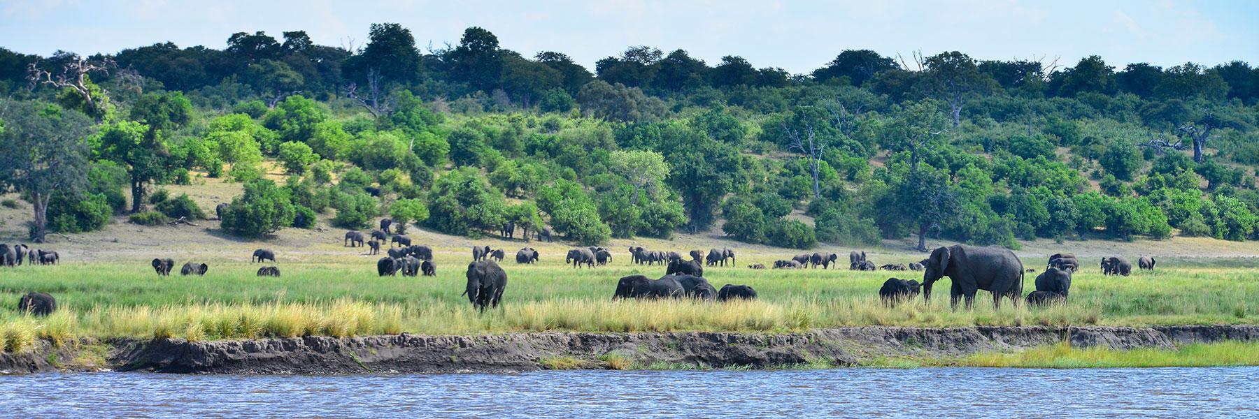 Afrika-Area-Zambezi-River