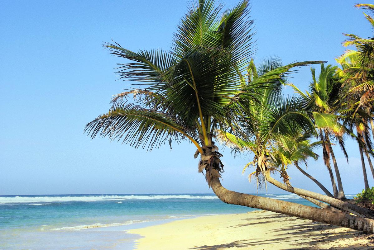 Kuba, Palmen, Strand