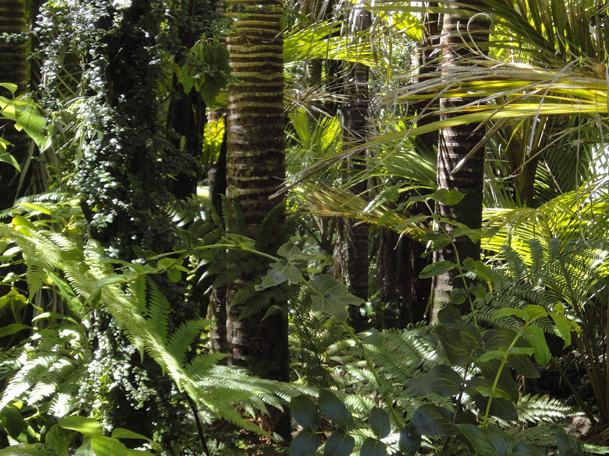 Regenwald Amazonasgebiet, Brasilien