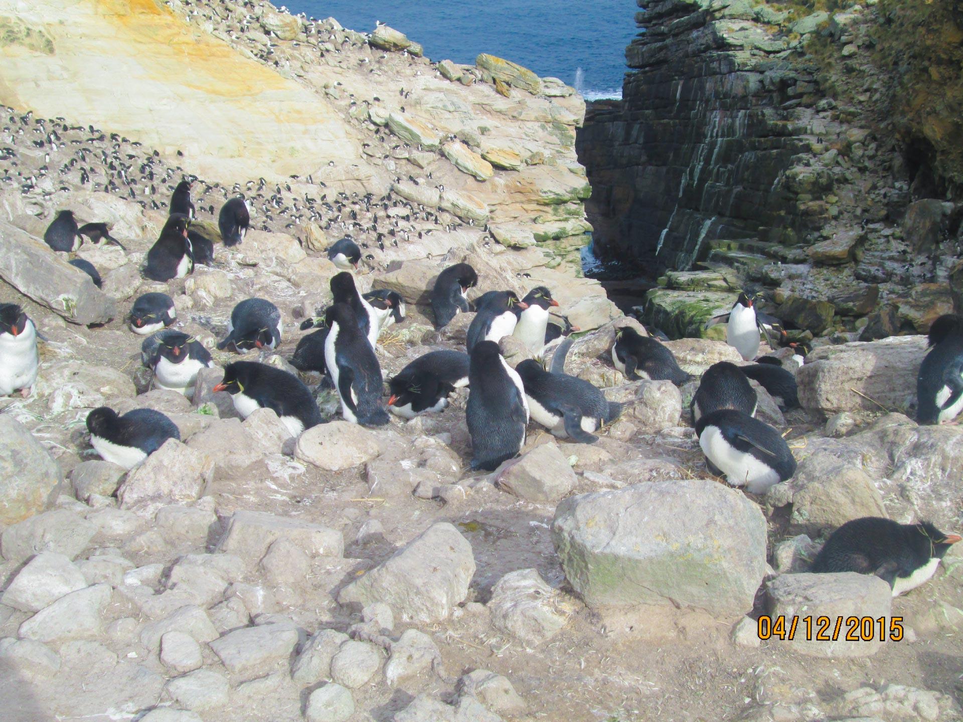 Vögel, Felsen und Meer auf den Falkland Inseln