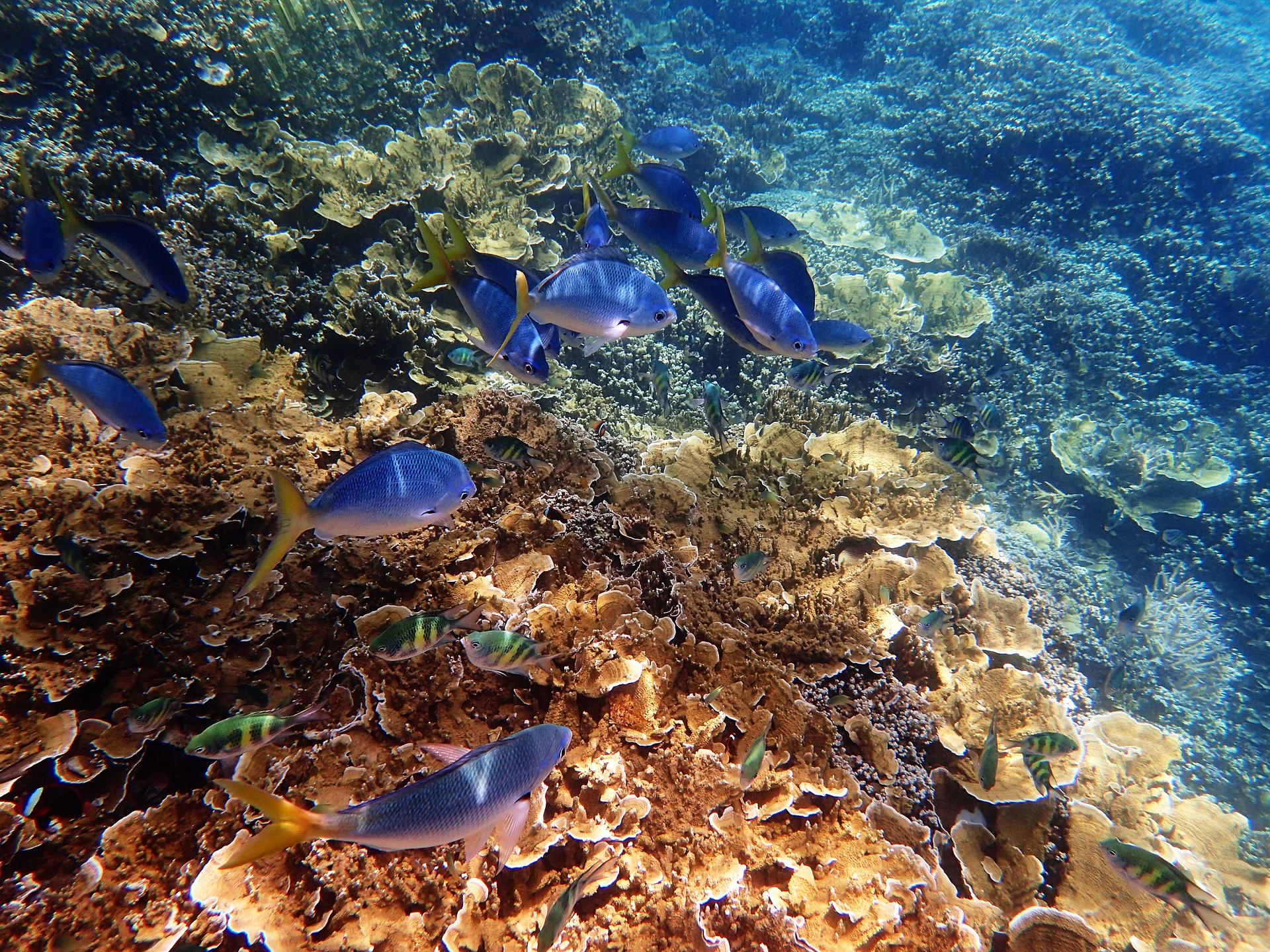 Underwater paradise: Great Barrier Reef