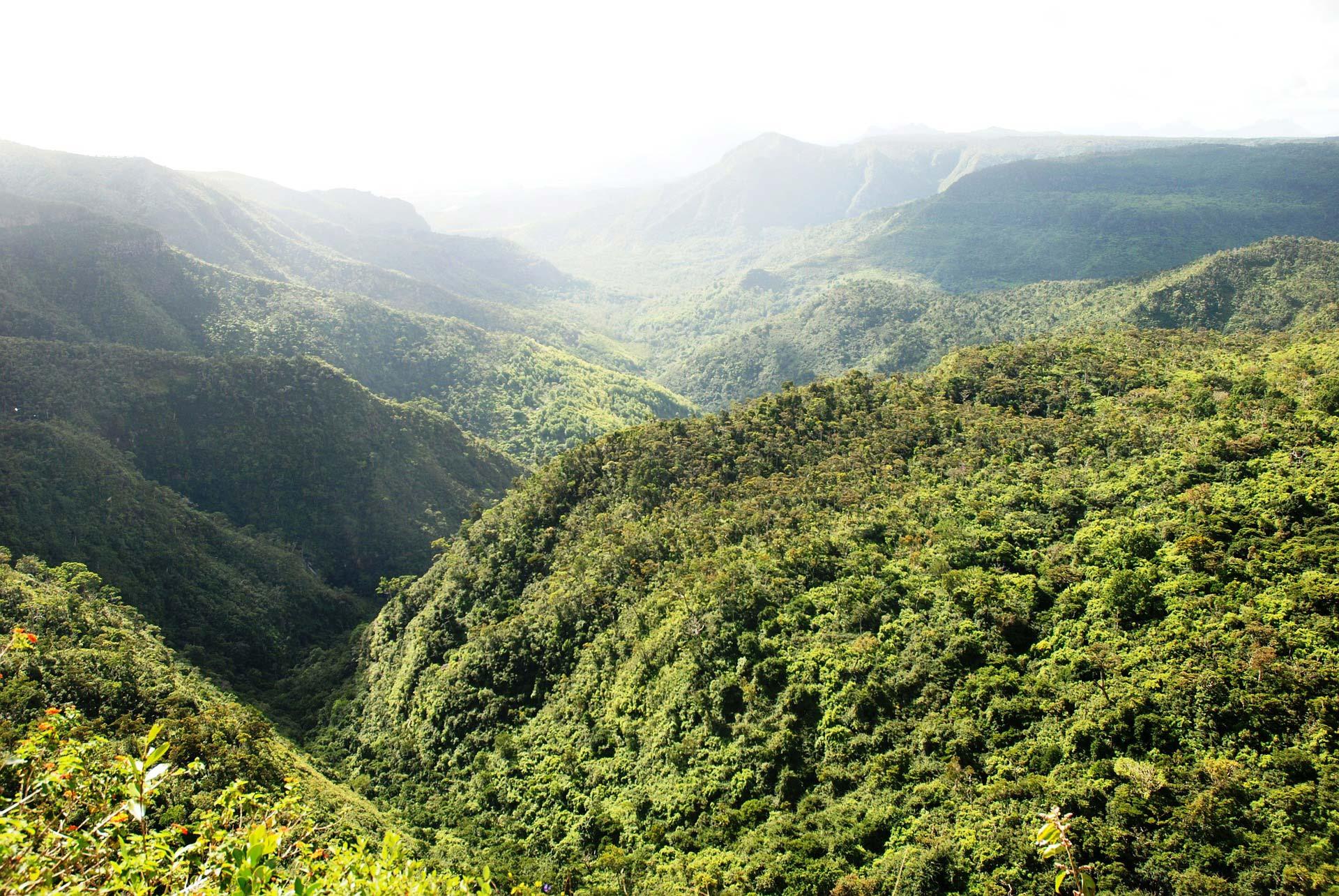Die Urwälder von Mauritius