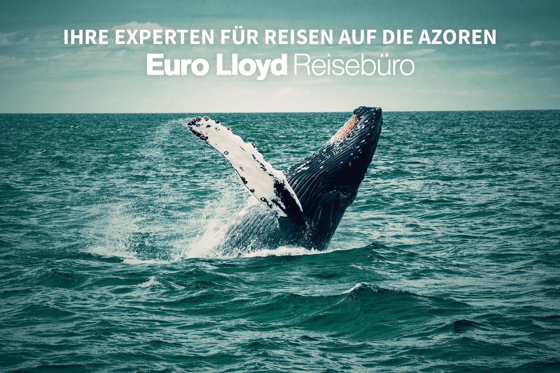 Euro Lloyd Banner