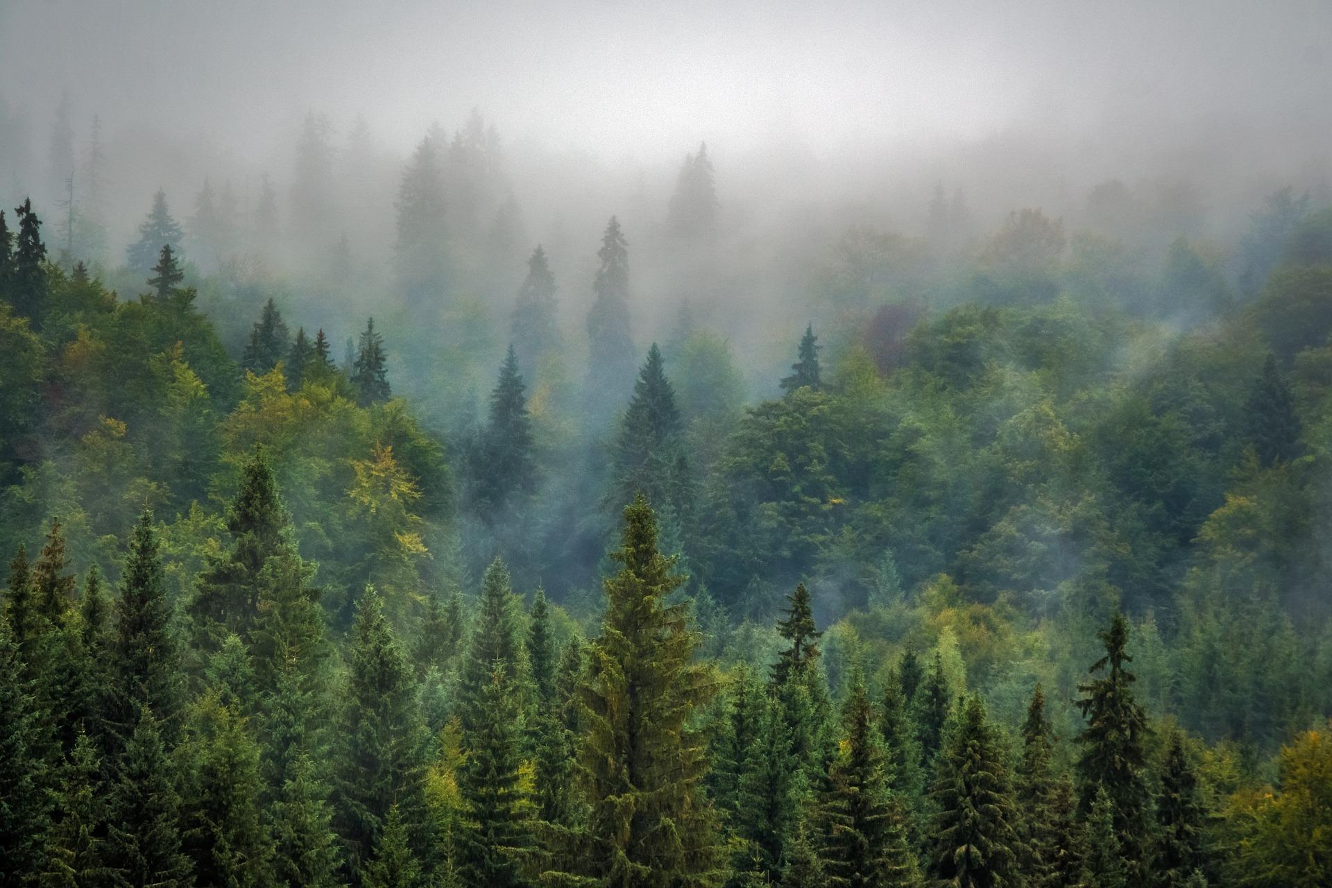 Wälder in den Karpaten